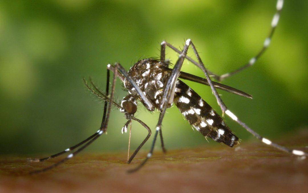 Limpeza de canaleta e os criadouros de dengue